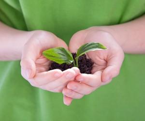environmentally firendly, World Environment Day, Burt's Bees, Natures Organics, AVEDA,