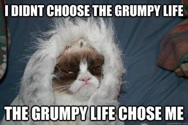 Book, Grumpy Cat, Lifestyle, viral, internet, cats