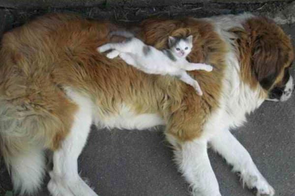 Cats, kitten, Instagram, Catstacam, Whiskas