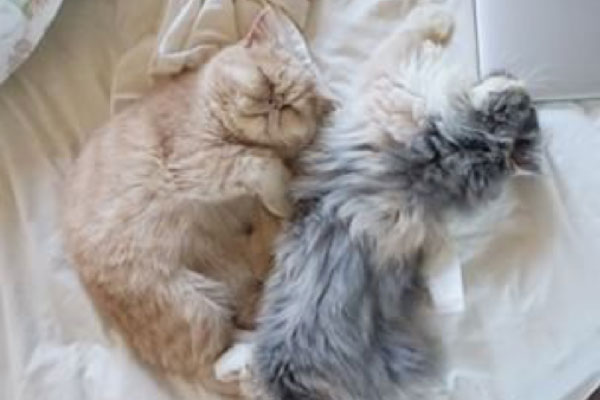 Cats, Kittens, Catstacam, Whiskas, Instagram