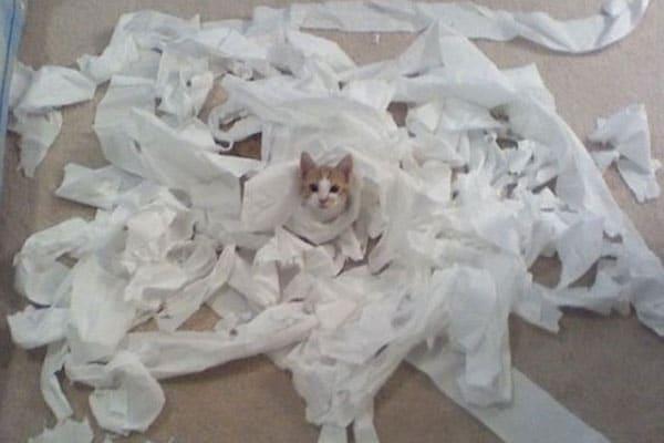 Cats, Instagram, Kittens, Catstacam