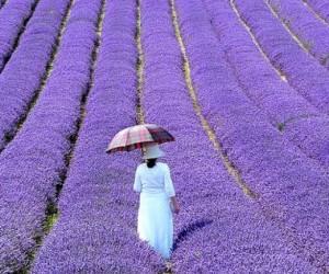 5 Reasons To Visit Provence