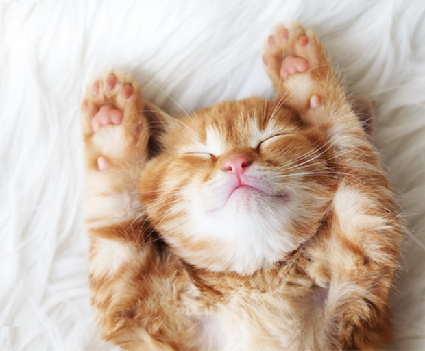 13 Purrfect Vacays For Crazy Cat Ladies She Said United