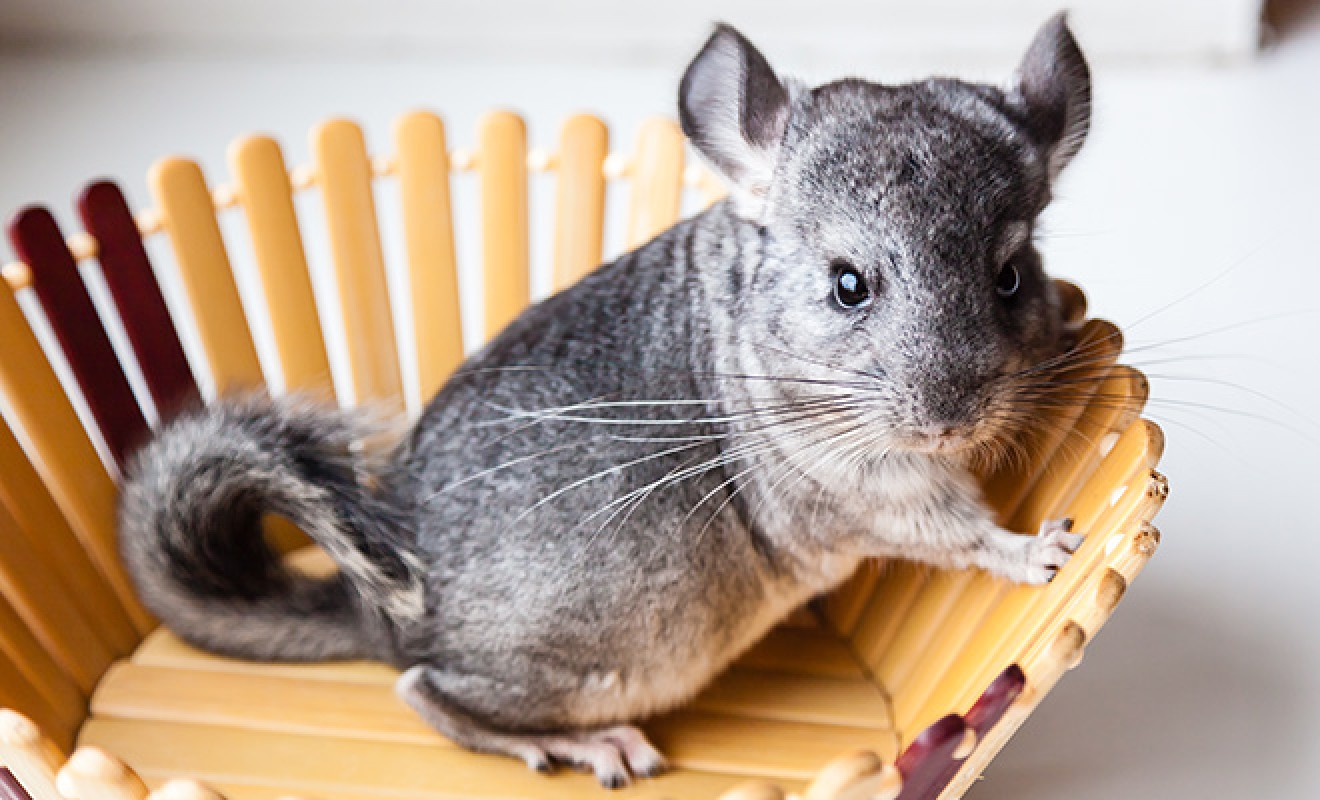 10 Insanely Cute Animals You Never Knew Existed