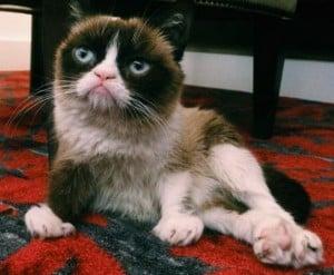 Book, Grumpy Cat, Lifestyle, viral, internet, cats