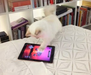 Cat, Instagram, Catstacam, Whiskas, Pets, Kitten