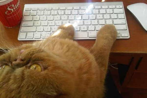 Cat, Kitten, Computer, Catstacam