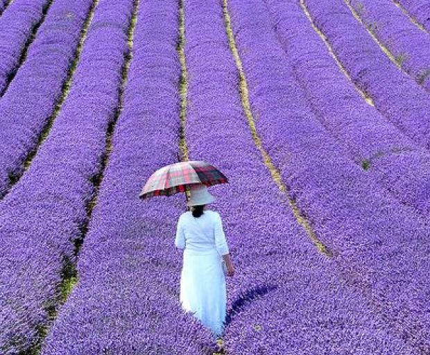 5 Reasons To Visit Provence