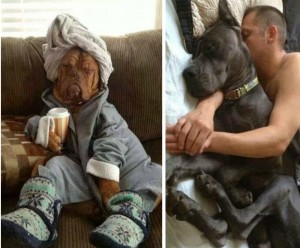 pets, pets who think they're people, animals
