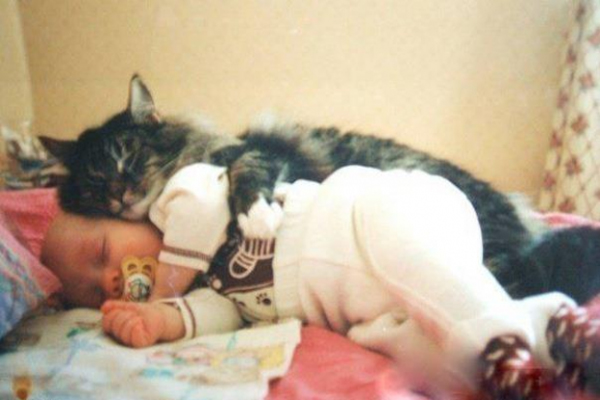 l-This-pic-shows-that-cats-are-best-friend-of-kids.