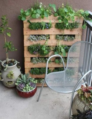Gardening Without A Garden: Tips For A Balcony or Patio