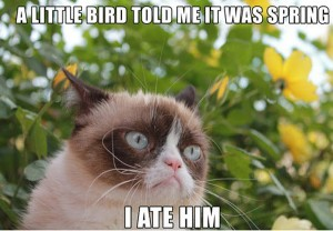 springtime, spring, funny things about spring, funny images