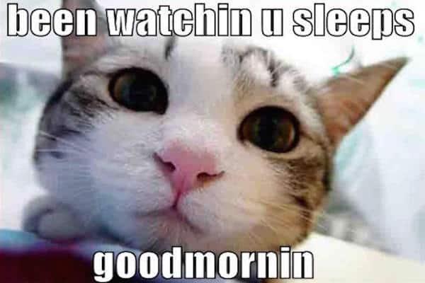 Funny Cat Pics (254)