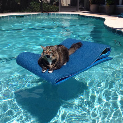 Cat-stuck-in-pool