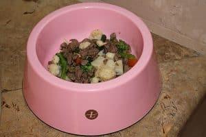 Barney's dinner dog food holiday