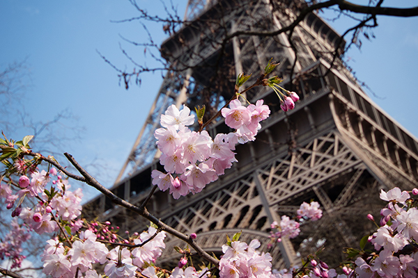 travel-pink-paris